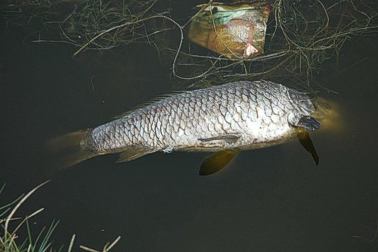 cbc zandvlei dead fish inspection 07 GL april 2012