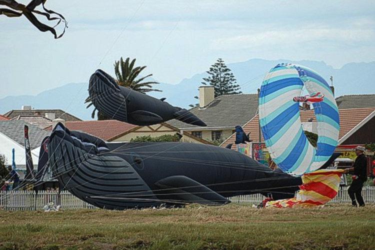 zvt-kite fest 06 nov 2011