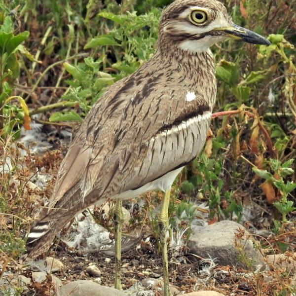 Paarl Bird Sanctuary Counts in 2021.