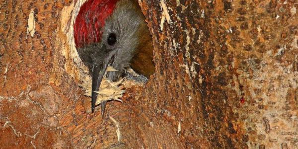 Kirstenbosch Bird Walk –  13 April 2021 led by Graham Pringle.
