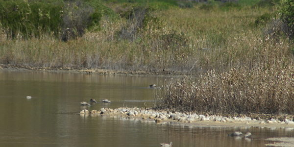 Managing the Central Pan at Zandvlei Nature Reserve – March 2021.