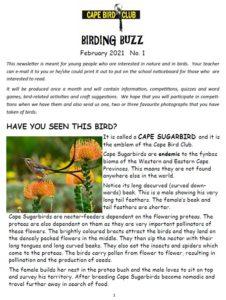 Birding Buzz