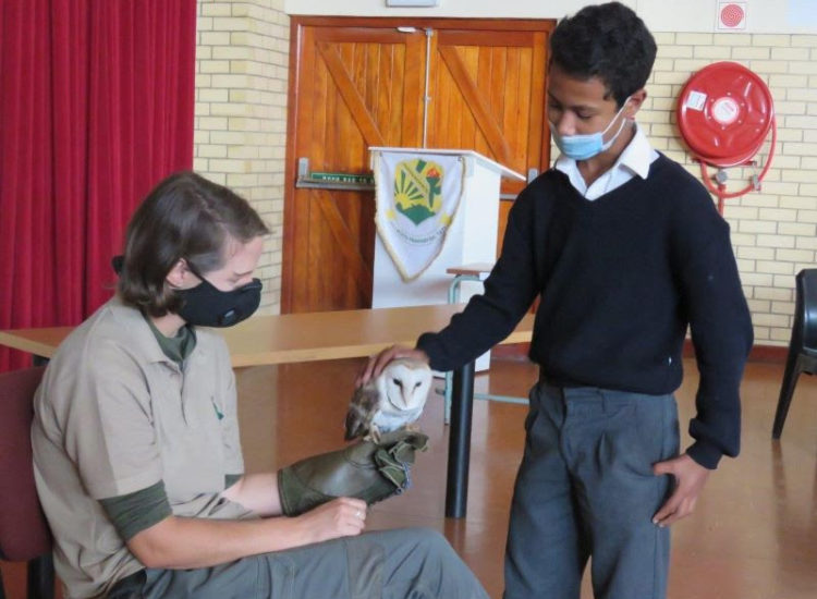 A Floreat Primary learner enjoys stroking Ziggy the Barn Owl held by handler Lauren Conradie. Photo by Priscilla Beeton