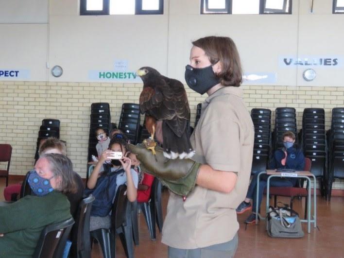 Lauren Conradie with Morticia the Harris Hawk. Photo by Priscilla Beeton