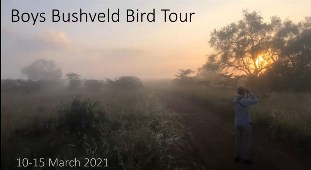 Boys Bushveld Bird Tour